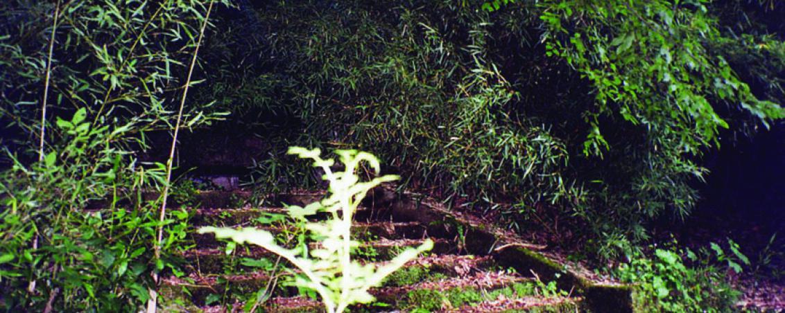 Abandonné durant une quinzaine d'années, la végétation a totalement recouvert l'embarcadère. Les marches sont à peine visibles. 1999, Ville de Tarnos