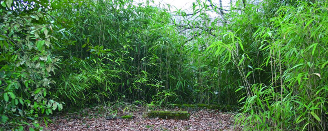 Le belvédère laissé à l'abandon : les bambous couvrent la vue panoramique, il ne reste que quelques vestiges de la balustrade. 2000, Ville de Tarnos